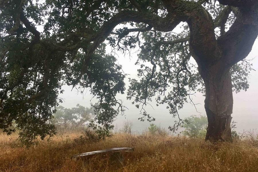 A Mandorla – Templários (outdoor)